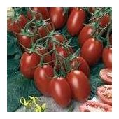 seed permaculture Tomate cerise « Red Robin » 20 graines méthode Bio