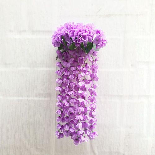 10 x Fuchsia Violet Foncé Arrière Large PLUG plantes Pré Commande